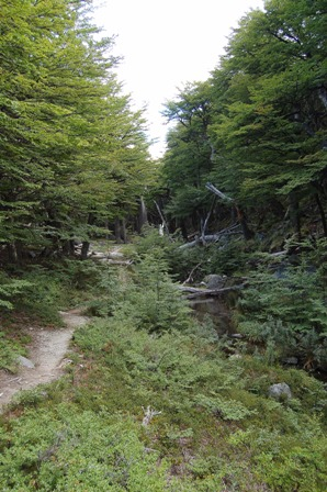 Trail to Lago Sucia